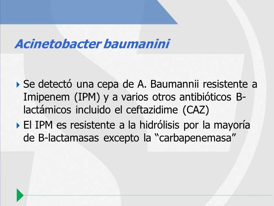 Acinetobacter baumanini