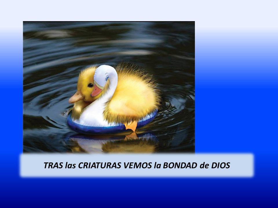 TRAS las CRIATURAS VEMOS la BONDAD de DIOS