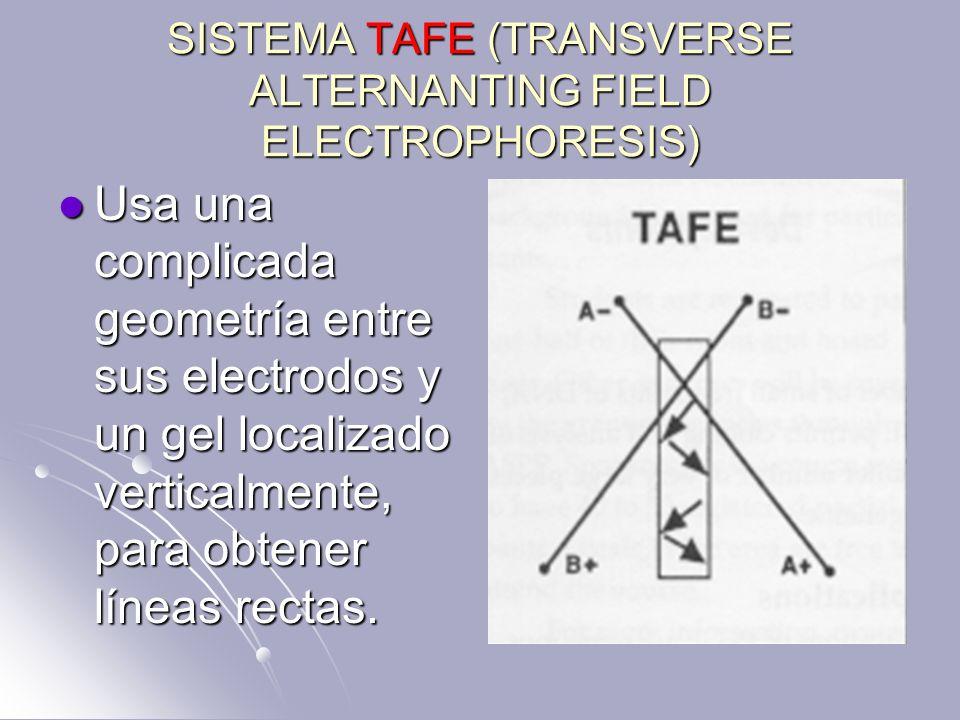 SISTEMA TAFE (TRANSVERSE ALTERNANTING FIELD ELECTROPHORESIS)
