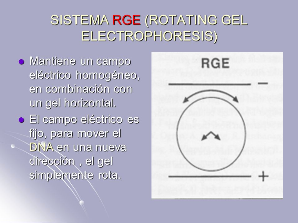 SISTEMA RGE (ROTATING GEL ELECTROPHORESIS)