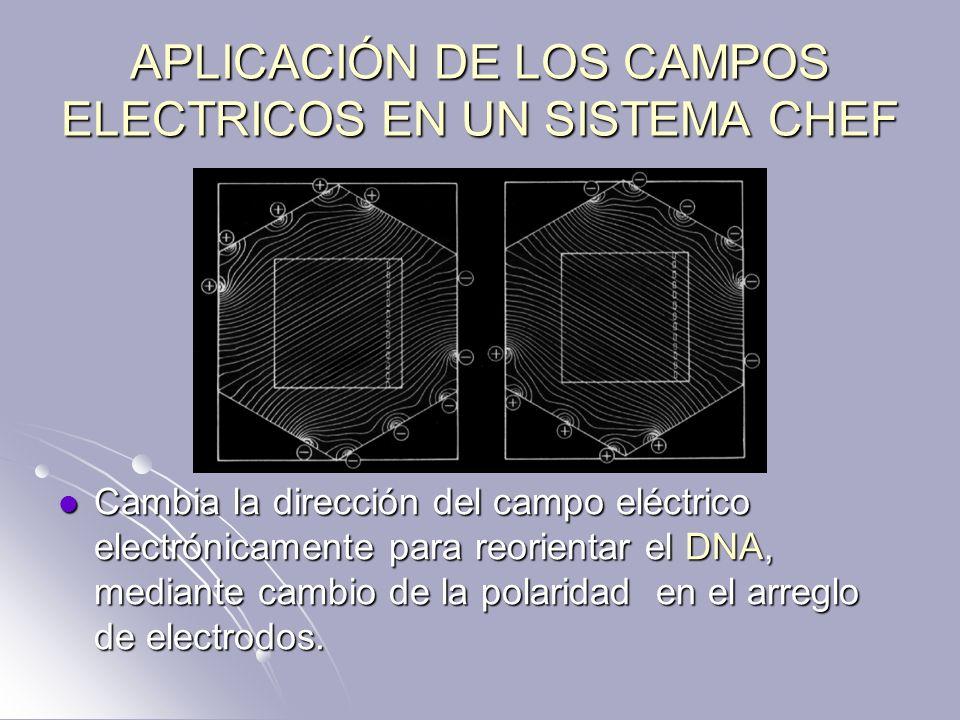 APLICACIÓN DE LOS CAMPOS ELECTRICOS EN UN SISTEMA CHEF