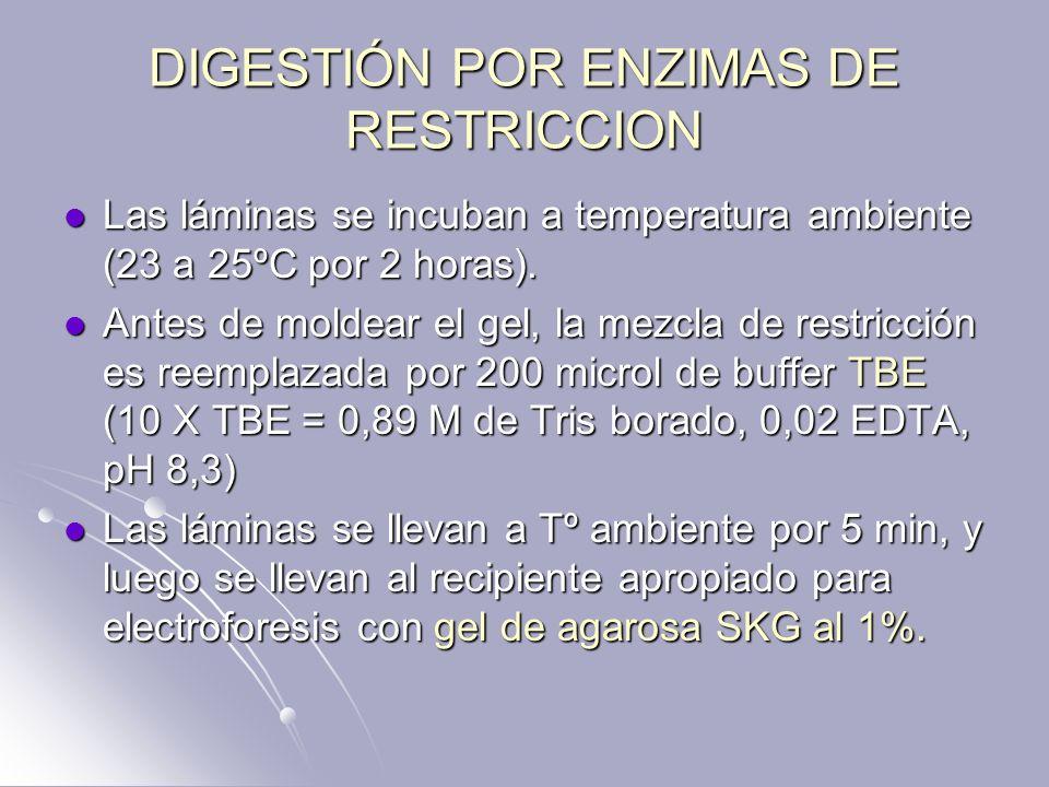 DIGESTIÓN POR ENZIMAS DE RESTRICCION