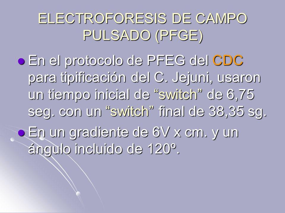ELECTROFORESIS DE CAMPO PULSADO (PFGE)