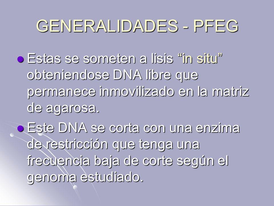 GENERALIDADES - PFEG Estas se someten a lisis in situ obteniendose DNA libre que permanece inmovilizado en la matriz de agarosa.