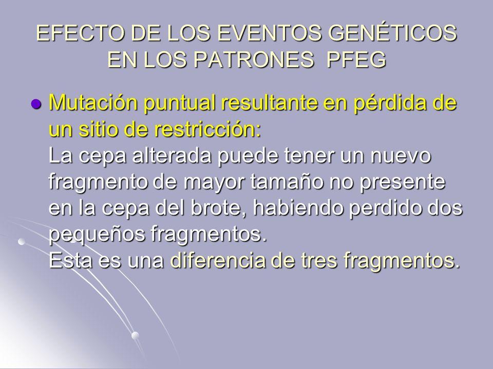 EFECTO DE LOS EVENTOS GENÉTICOS EN LOS PATRONES PFEG