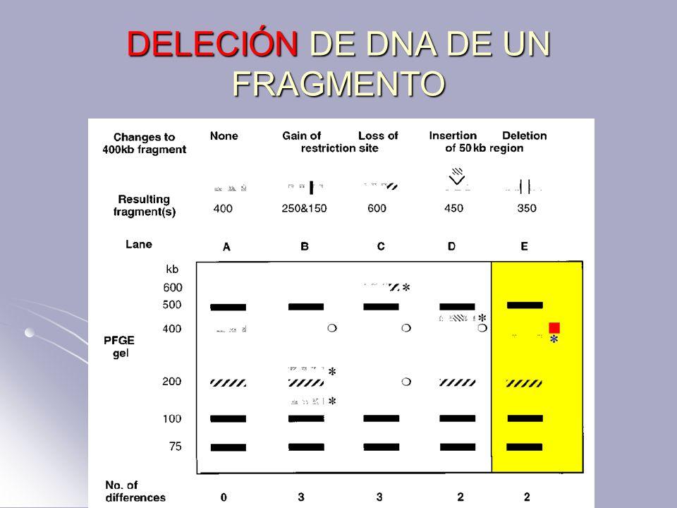 DELECIÓN DE DNA DE UN FRAGMENTO