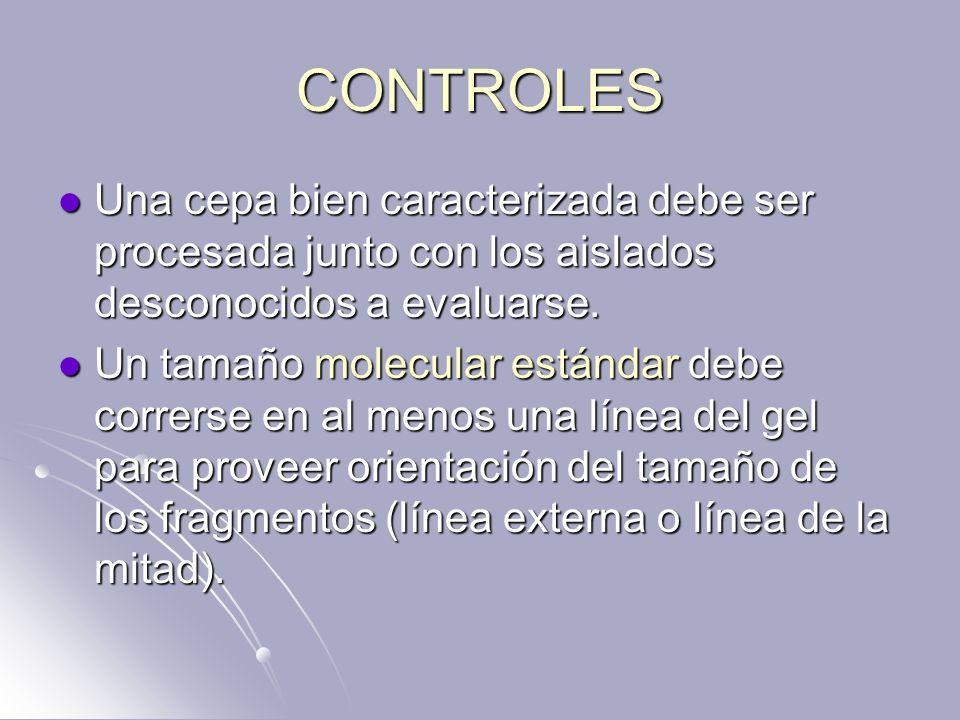 CONTROLES Una cepa bien caracterizada debe ser procesada junto con los aislados desconocidos a evaluarse.