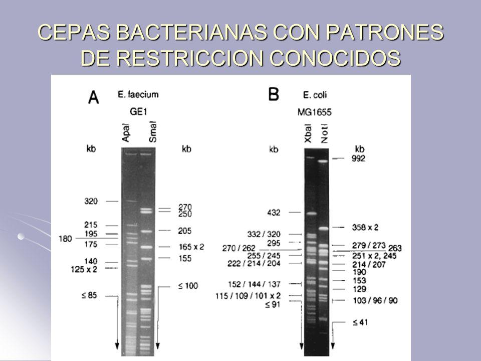 CEPAS BACTERIANAS CON PATRONES DE RESTRICCION CONOCIDOS