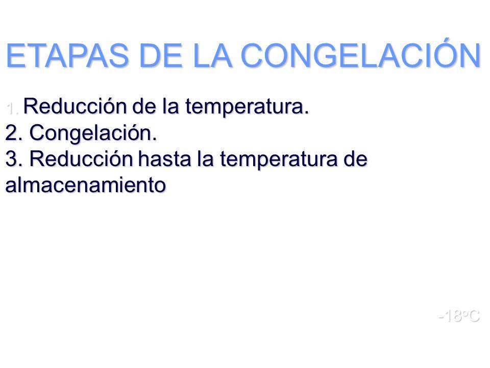 ETAPAS DE LA CONGELACIÓN