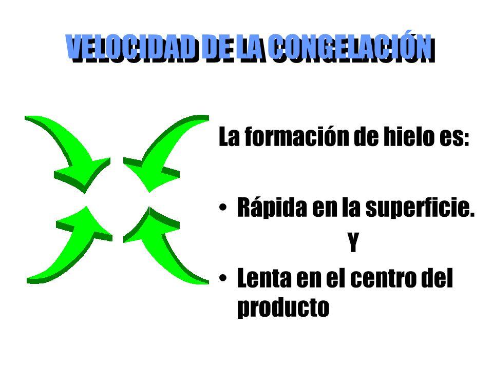 VELOCIDAD DE LA CONGELACIÓN