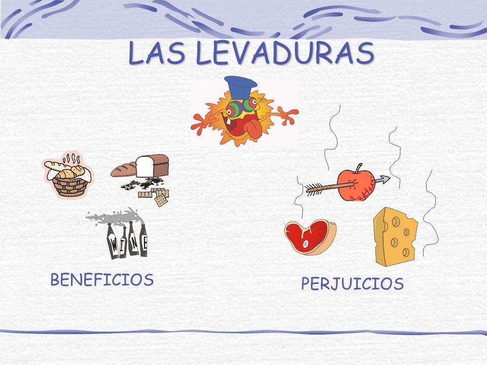 LAS LEVADURAS BENEFICIOS PERJUICIOS