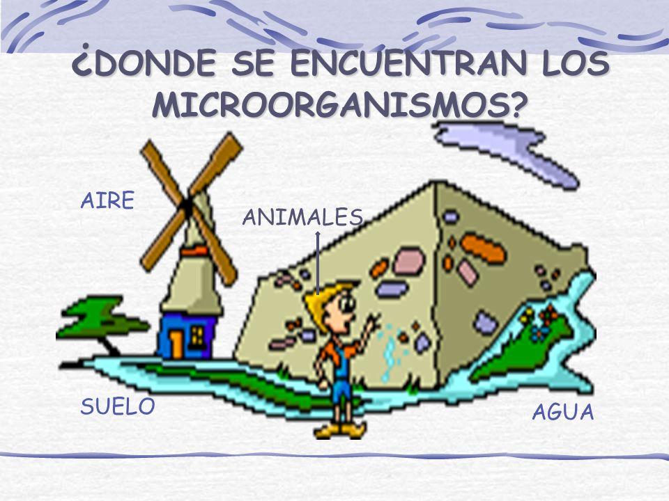 ¿DONDE SE ENCUENTRAN LOS MICROORGANISMOS