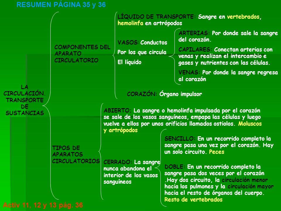 LA CIRCULACIÓN. TRANSPORTE DE SUSTANCIAS