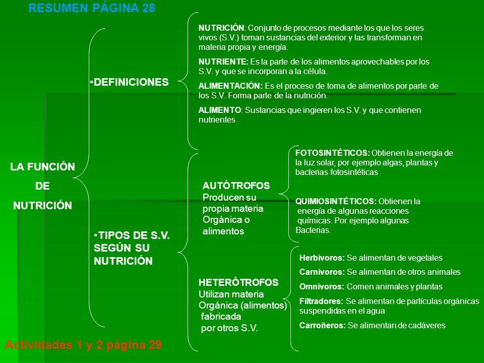 RESUMEN PÁGINA 28 Actividades 1 y 2 página 29 DEFINICIONES LA FUNCIÓN
