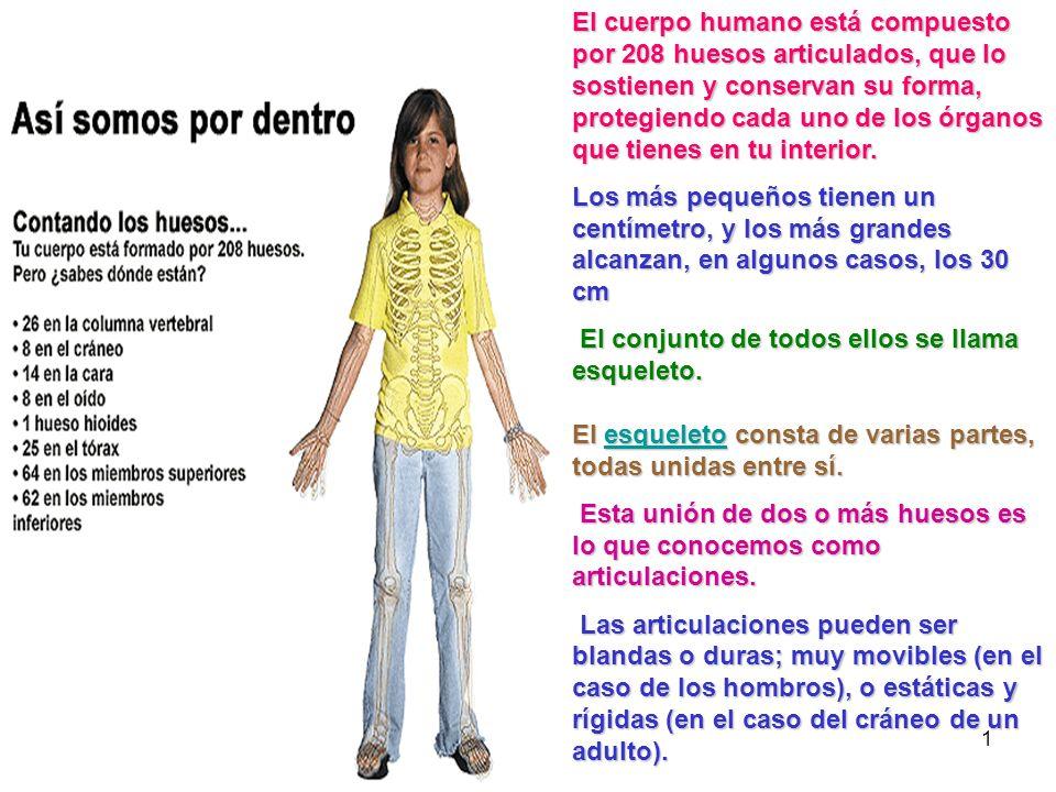 El cuerpo humano está compuesto por 208 huesos articulados, que lo sostienen y conservan su forma, protegiendo cada uno de los órganos que tienes en tu interior.