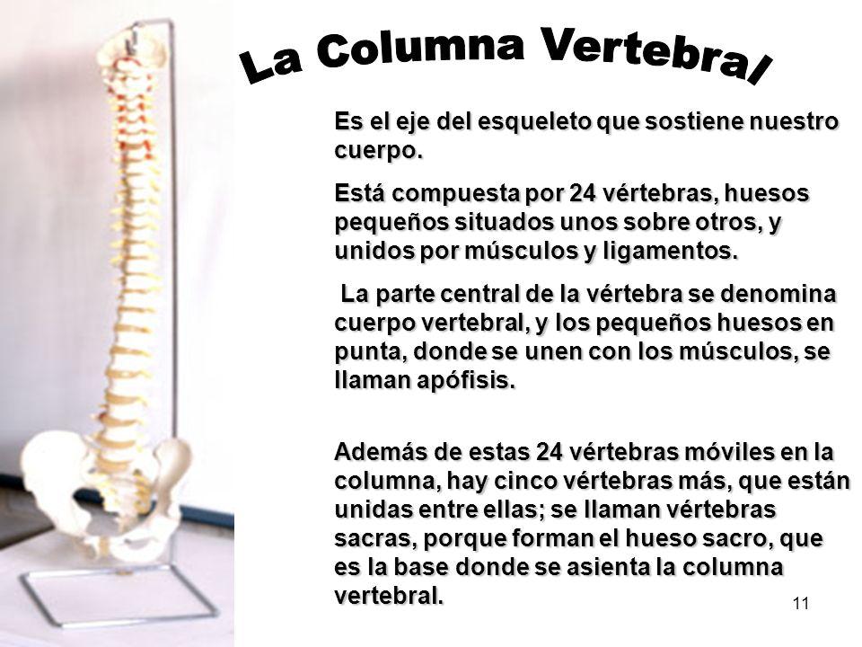 La Columna VertebralEs el eje del esqueleto que sostiene nuestro cuerpo.