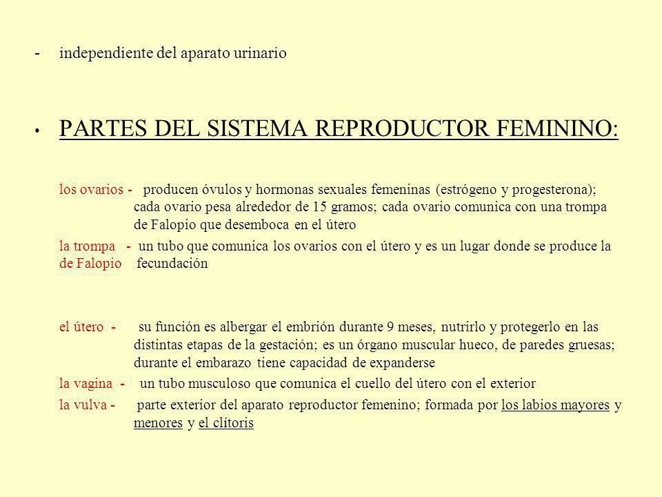 PARTES DEL SISTEMA REPRODUCTOR FEMININO: