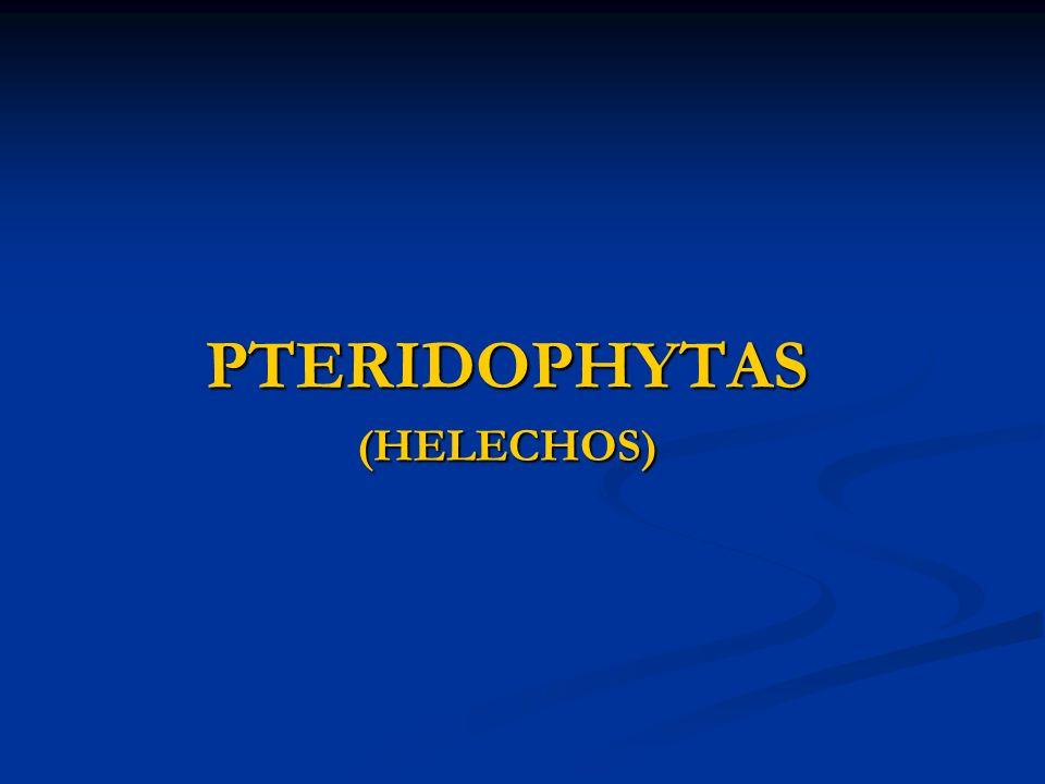 PTERIDOPHYTAS (HELECHOS)