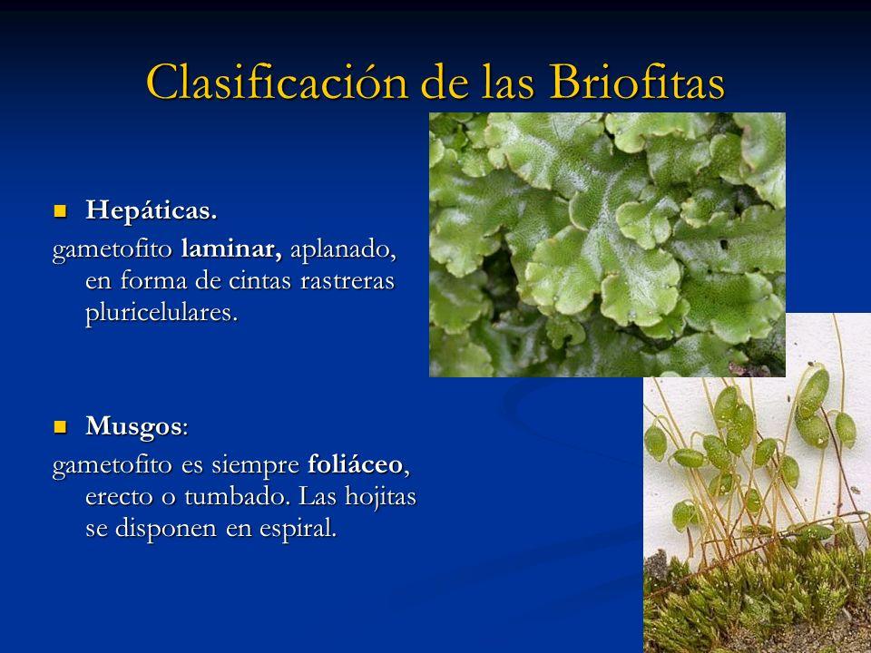 Clasificación de las Briofitas
