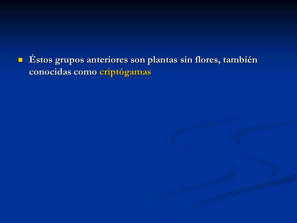 Éstos grupos anteriores son plantas sin flores, también conocidas como criptógamas