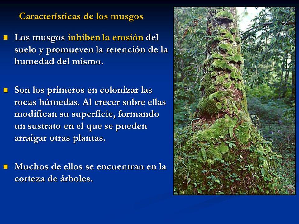 Características de los musgos