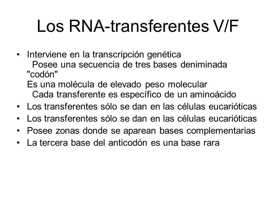 Los RNA-transferentes V/F