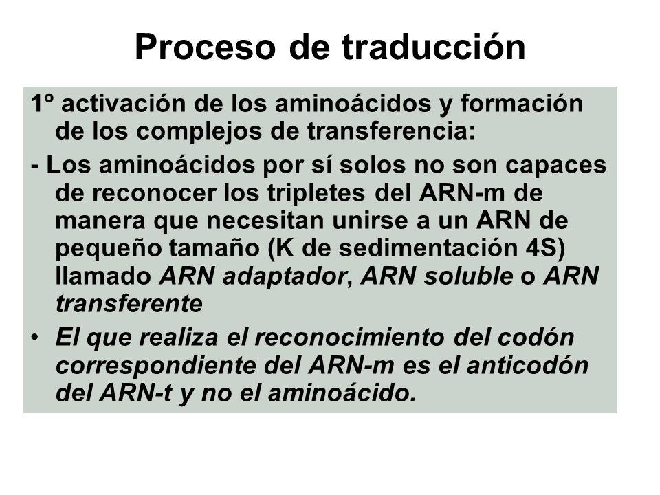 Proceso de traducción 1º activación de los aminoácidos y formación de los complejos de transferencia: