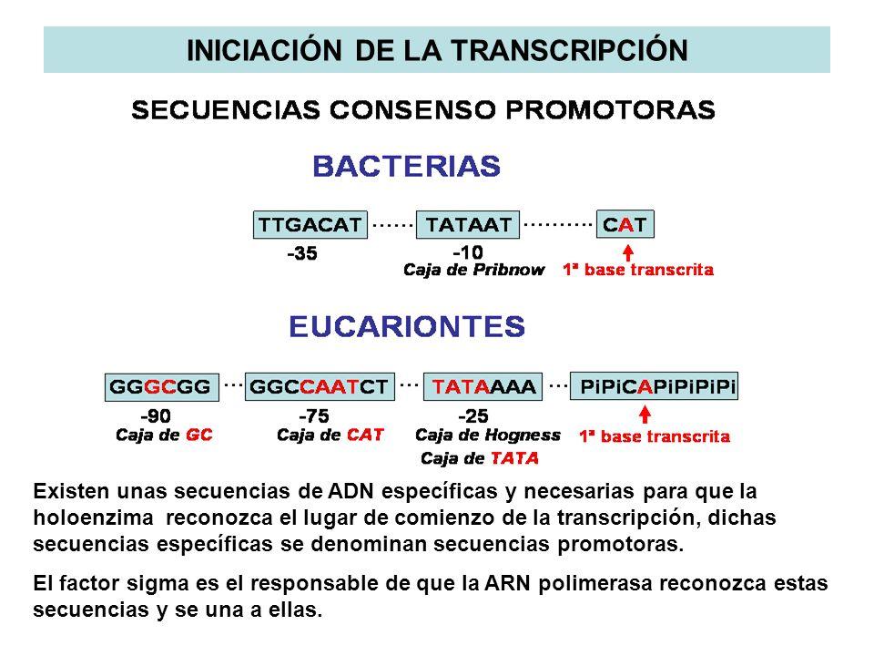 INICIACIÓN DE LA TRANSCRIPCIÓN
