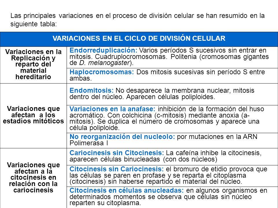 VARIACIONES EN EL CICLO DE DIVISIÓN CELULAR
