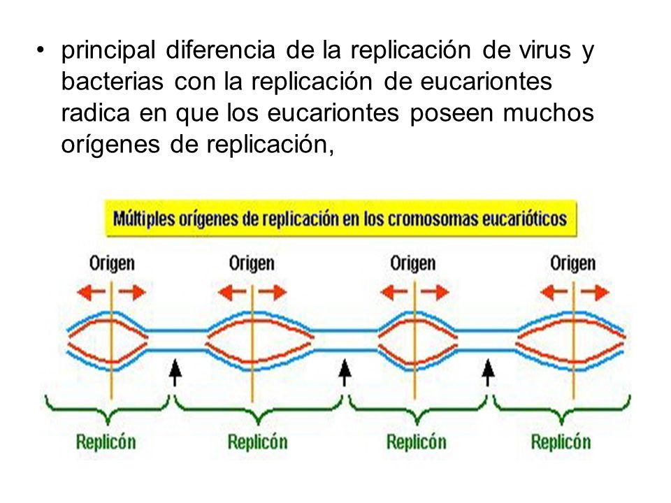 principal diferencia de la replicación de virus y bacterias con la replicación de eucariontes radica en que los eucariontes poseen muchos orígenes de replicación,