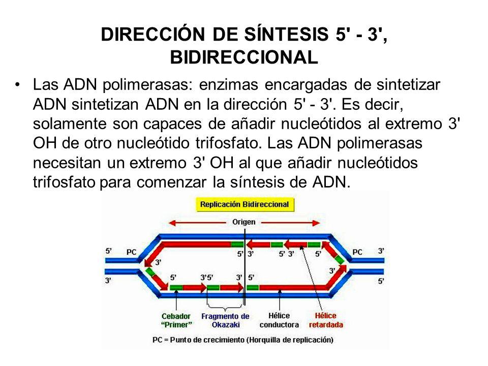 DIRECCIÓN DE SÍNTESIS 5 - 3 , BIDIRECCIONAL