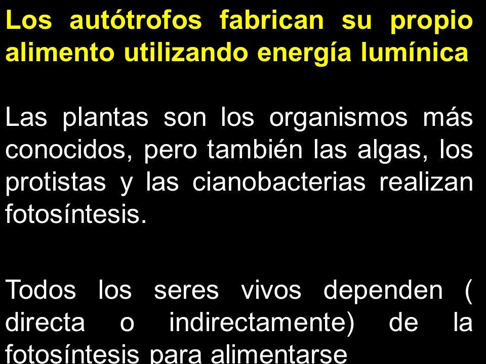 Los autótrofos fabrican su propio alimento utilizando energía lumínica