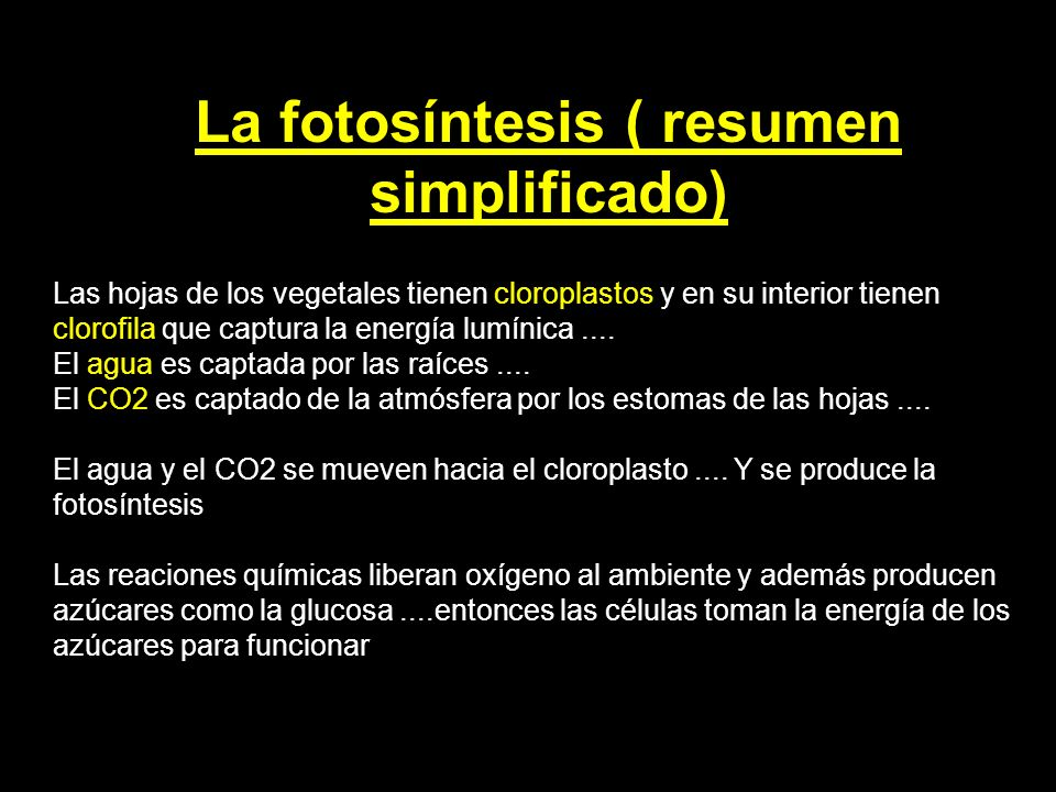 La fotosíntesis ( resumen simplificado)