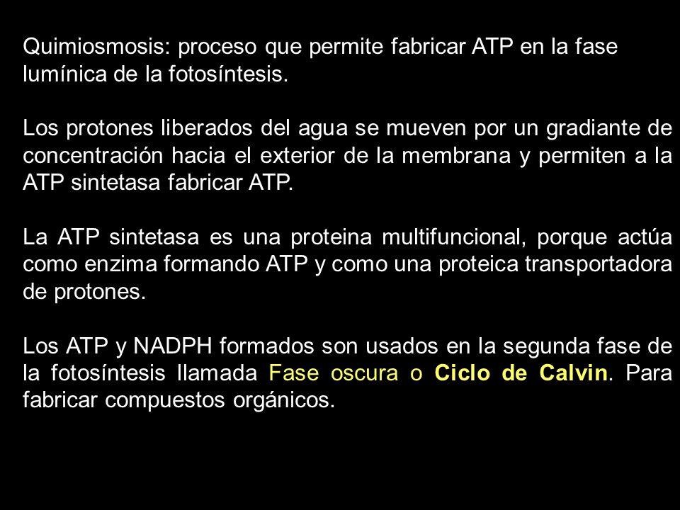 Quimiosmosis: proceso que permite fabricar ATP en la fase lumínica de la fotosíntesis.