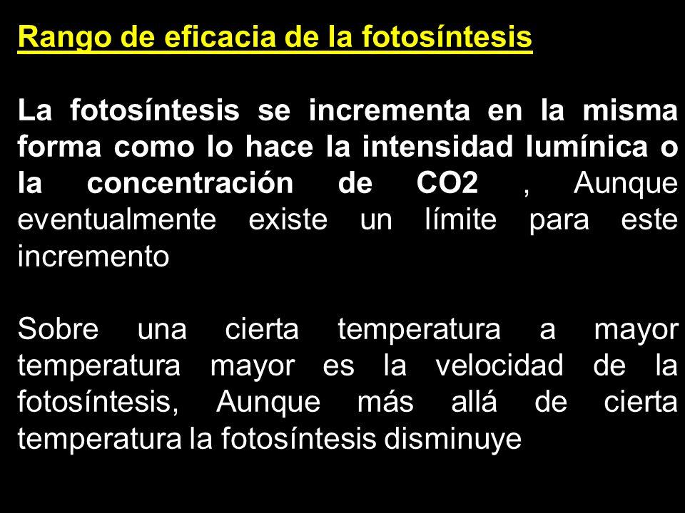 Rango de eficacia de la fotosíntesis