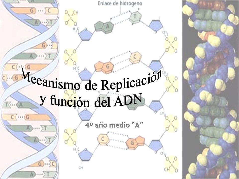 Mecanismo de Replicación
