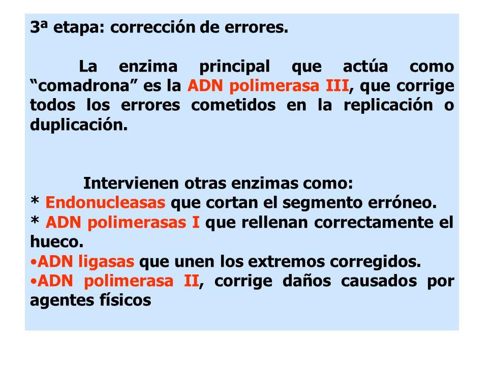 3ª etapa: corrección de errores.