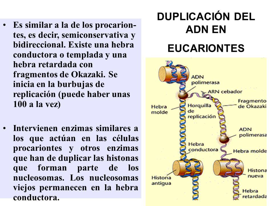 DUPLICACIÓN DEL ADN EN EUCARIONTES