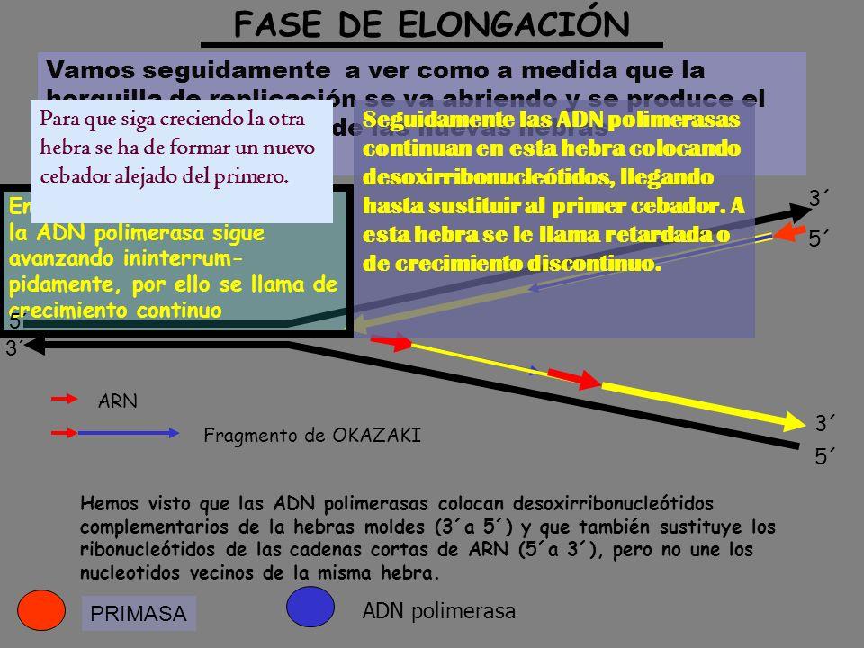 FASE DE ELONGACIÓN