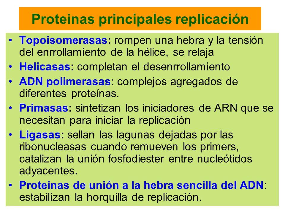 Proteinas principales replicación