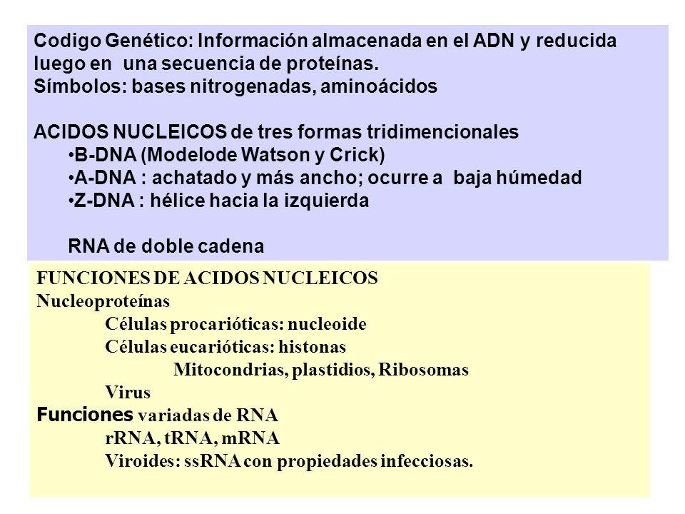 Codigo Genético: Información almacenada en el ADN y reducida luego en una secuencia de proteínas.