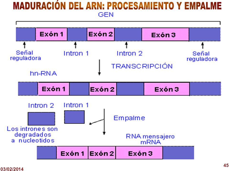 MADURACIÓN DEL ARN: PROCESAMIENTO Y EMPALME