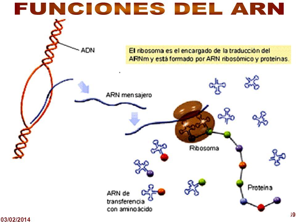 FUNCIONES DEL ARN 49 24/03/2017