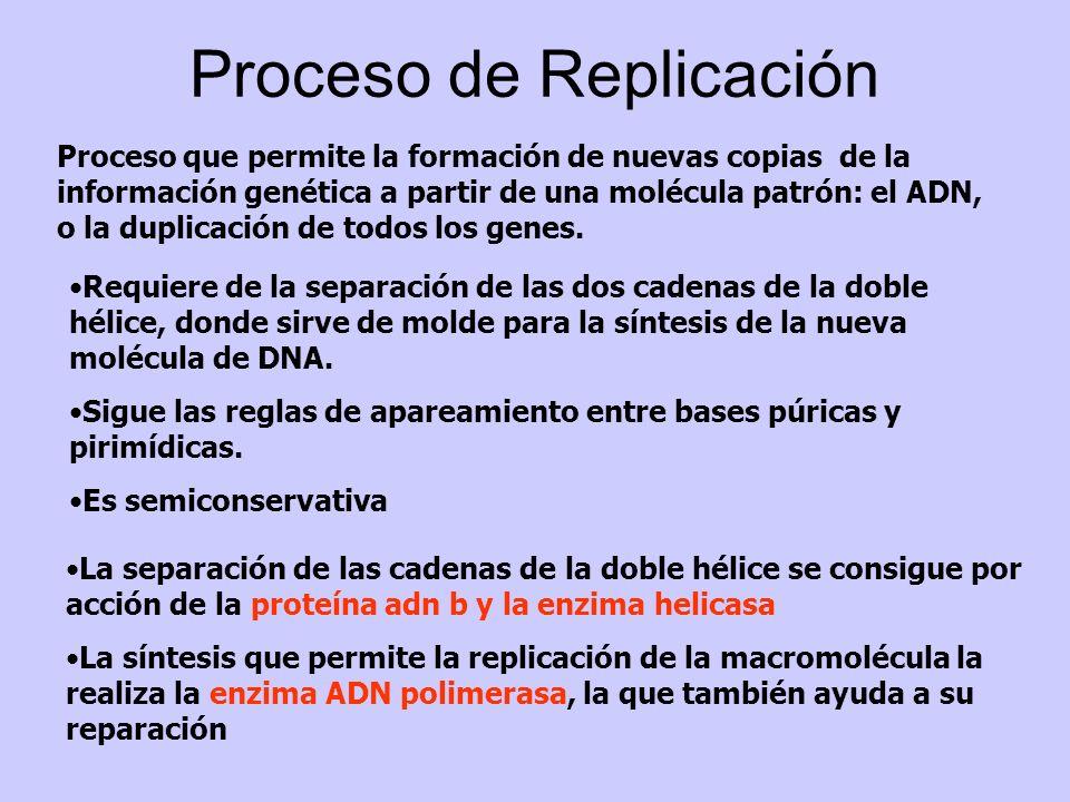 Proceso de Replicación