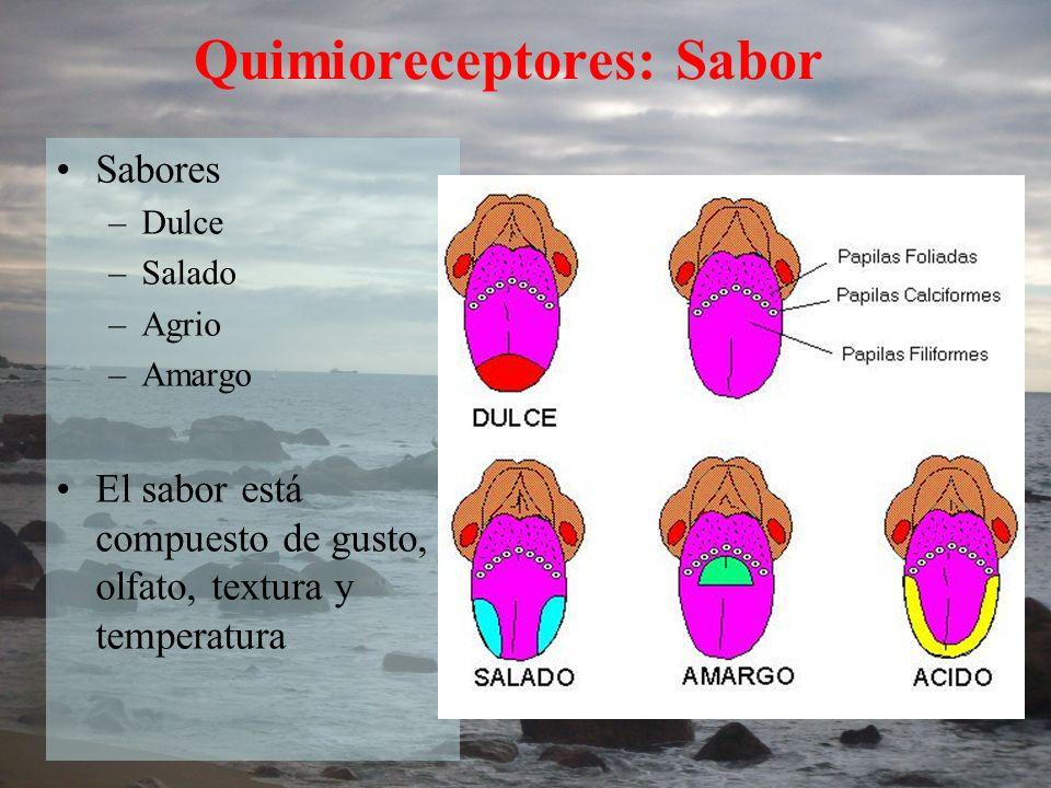 Quimioreceptores: Sabor
