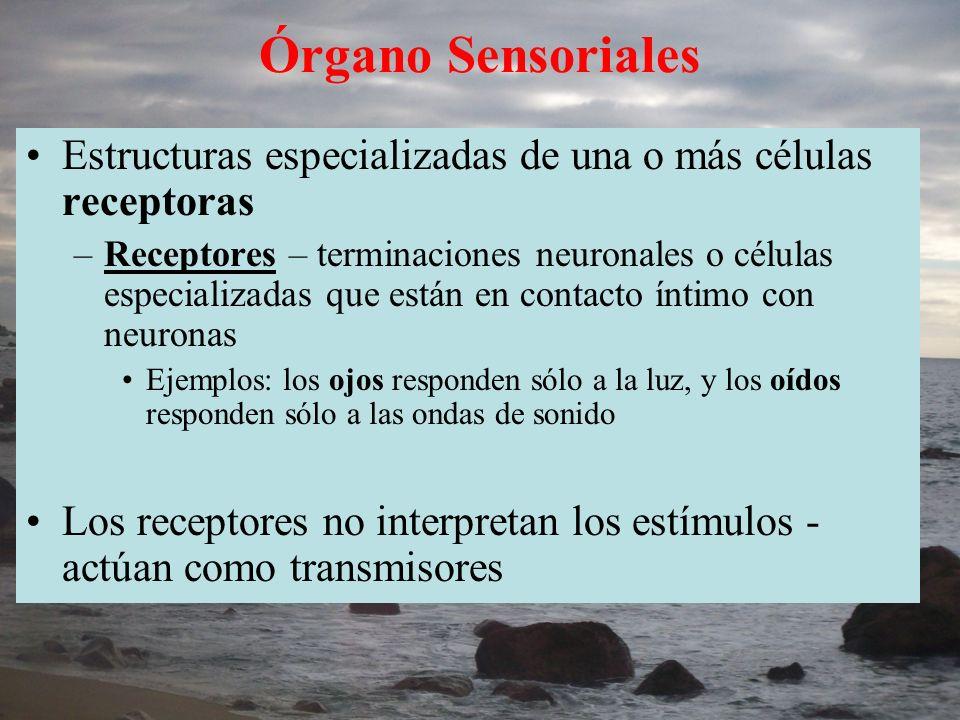 Órgano Sensoriales Estructuras especializadas de una o más células receptoras.