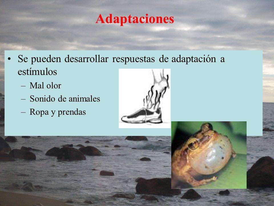 Adaptaciones Se pueden desarrollar respuestas de adaptación a estímulos. Mal olor. Sonido de animales.
