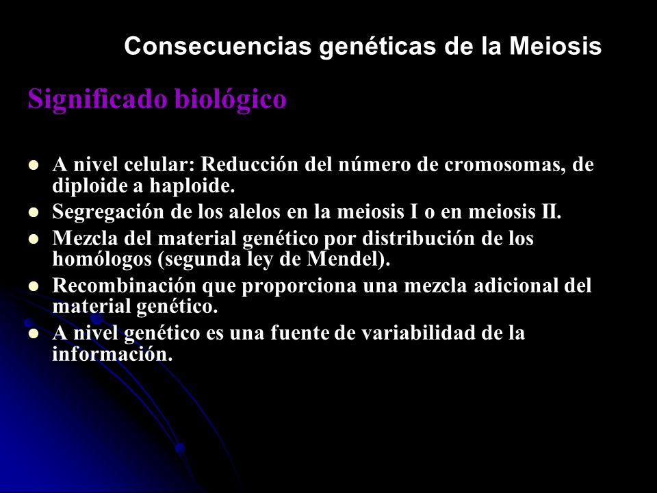 Consecuencias genéticas de la Meiosis