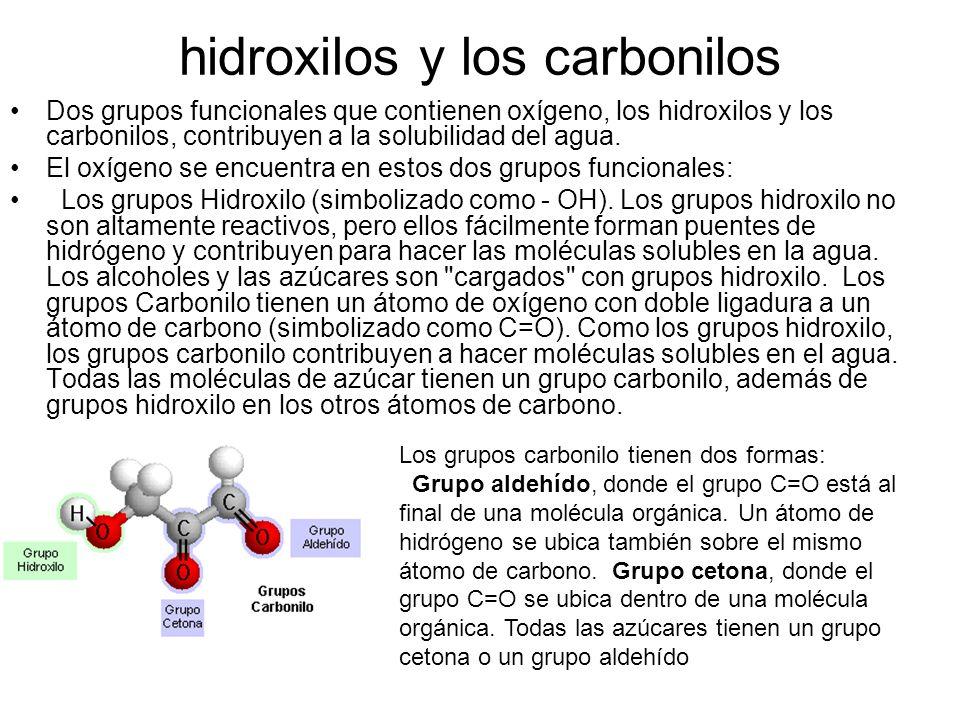 hidroxilos y los carbonilos
