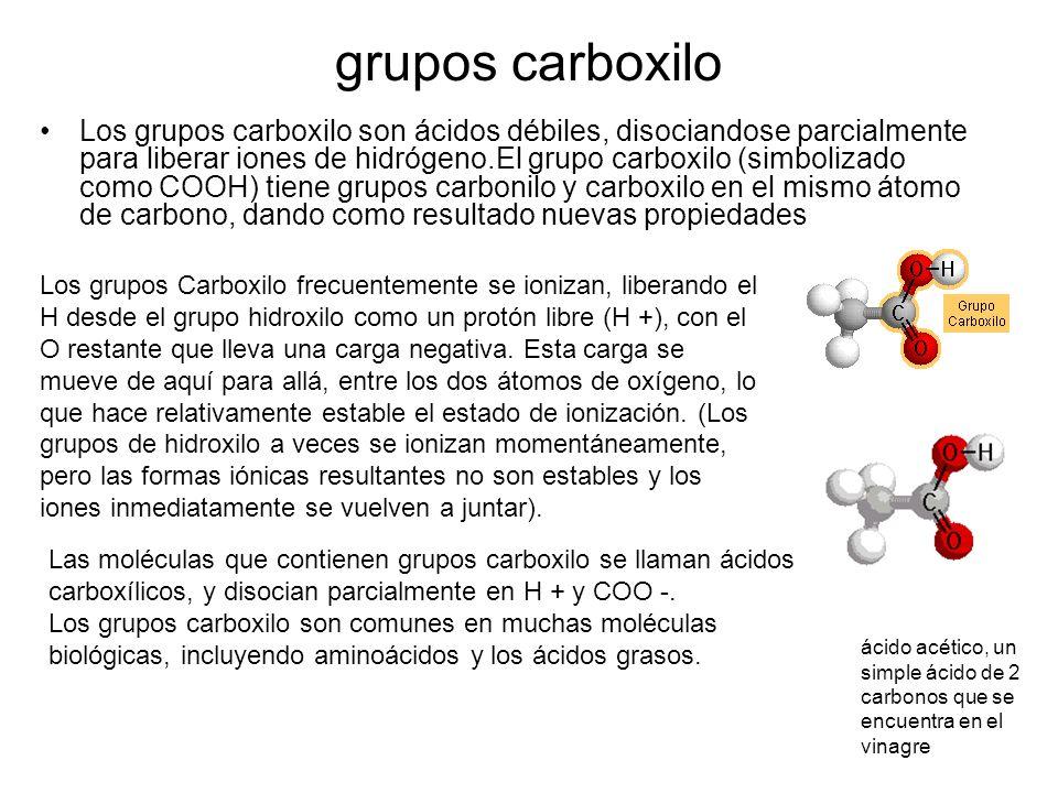 grupos carboxilo